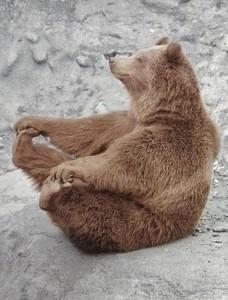 Glad bjørn